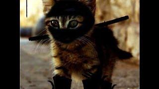 Стрим Ninja Cat NES Прохождение