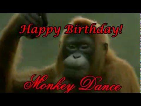 funny happy birthday song monkeys sing happy birthday to - 1280×720