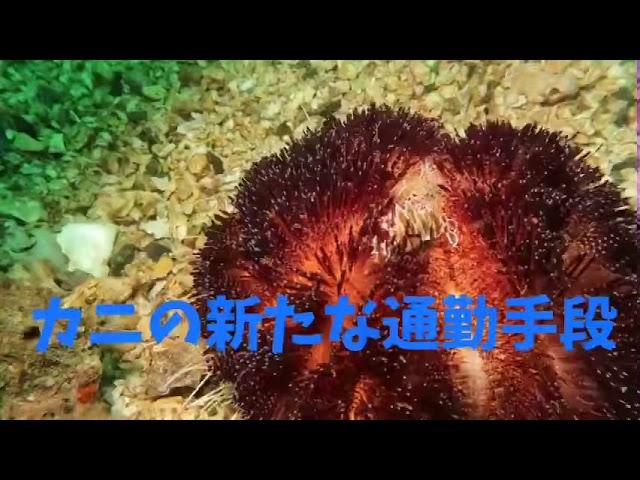 潜楽屋番外編『面白い動物動画』