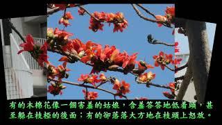 Publication Date: 2018-11-08 | Video Title: 優異奬- V19 木棉波波的故事-- 樂善堂楊葛小琳中學