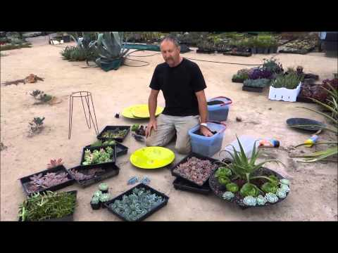Succulent Dish Gardens   Attila's Way