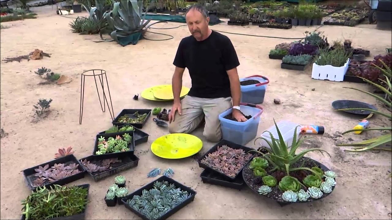 succulent dish gardens attilas way youtube