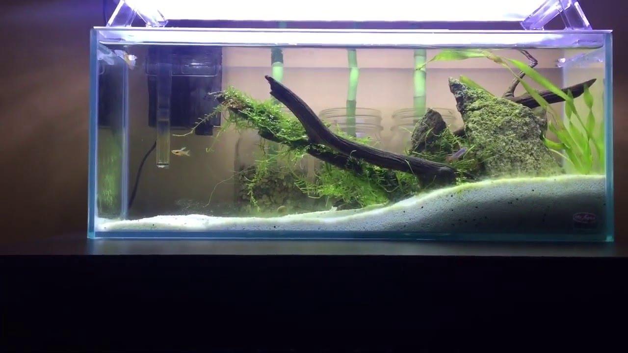 Mr Aqua Bookshelf Tank