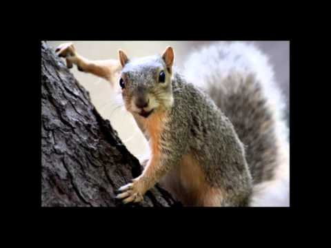 The Crazy Happy Birthday Squirrel!  This guy is NUTZ!  LOL