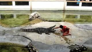 Шоу крокодилов в Бангкоке