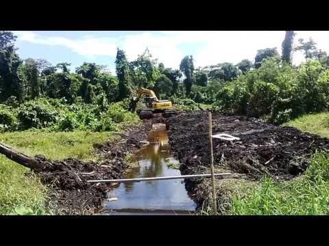 swamp excavator kerja clearing buka lahan kebun sawit di tanah gambut