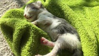 Этот котёнок ел камни и грязь, чтобы выжить