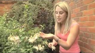 Garden ER - Bonnie's Top Tips -Dead Heading