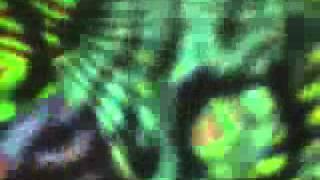 深海伝説マーメノイド Shinkai-Densetsu-Mermenoid OP「WILD MOON」(アニメ anime)