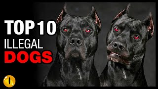 TOP 10 ILLEGAL DOG BREEDS