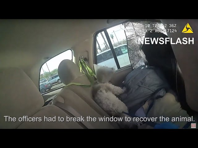 Cops Rescued Dog In Distress While Owner Was Shop
