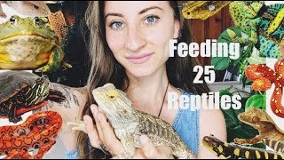Feeding All of My Reptiles