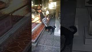ANJING NAKAL MAIN DENGAN PACAR MAJIKAN / PLAYING WITH DOGS