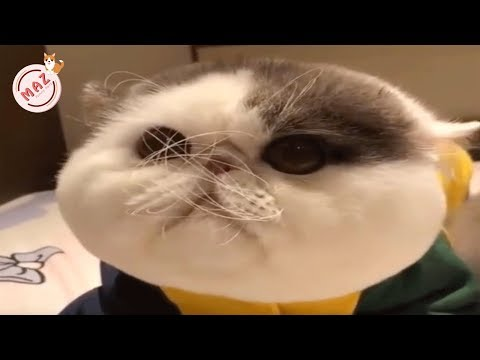 Tik Tok Dog, Cat, Animals - Cute Funny Pets Videos #21