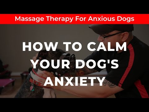 MASSAGE THERAPY FOR DOGS