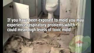 Signs of a mold problem