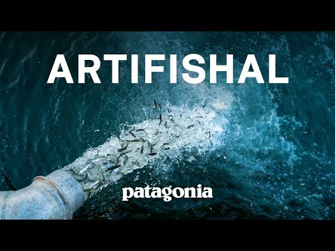 Artifishal Full Film | The Fight To Save Wild Salmon