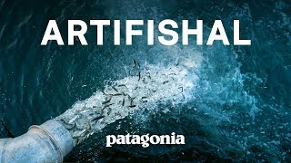 Full Film: Artifishal | The Fight to Save Wild Salmon