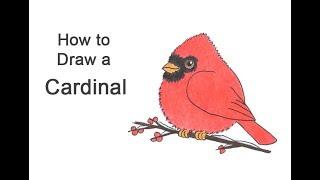 How to Draw a Cardinal (Cartoon)