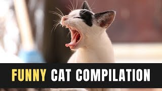 Try Not To Laugh 2019 | Funny Cat Compilation | Funny Animals Videos