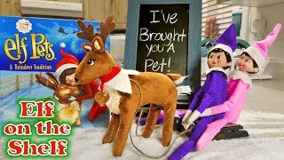 Purple & Pink Elf on the Shelf - Reindeer Pet Arrives Pulling Sleigh! Day 4