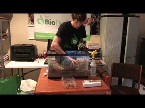 Howto Leopard Gecko BioActive self-cleaning, self-maintaining Terrarium with BioDude Terra Sahara