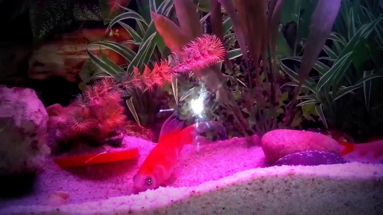 Fish aquarium cleaning tips - How To Fish Care Tips Fish Tank Care In Urdu Hindi
