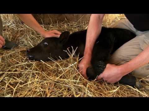 Black Angus Nure Farm - Società Agricola Nure