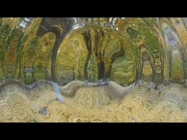 Изображение предпросмотра прочтения – ИринаНайдёнова читает произведение «Когда я гляжу на летящие листья» М.И.Цветаевой