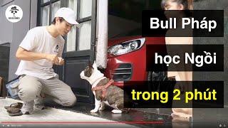 Cách huấn luyện chó cơ bản BoṡṡDog | Dạy Bขll Pháp ngồi nhąnh tr๐ng 2 phút | Fręnch BuĮĮdog training