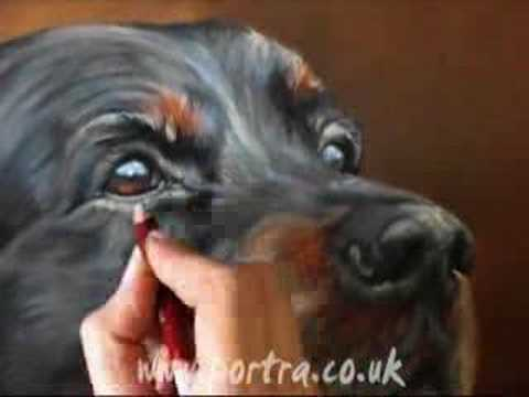Speed painting dog portrait in pastel (Setter)