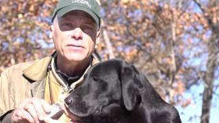 Retriever Training - Treating Your Dog's Pads