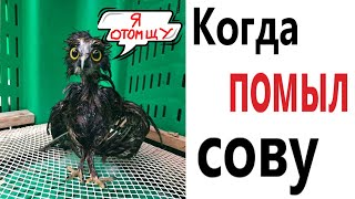 Приколы КОГДА ПОМЫЛ СОВУ МЕМЫ АНИМАЦИЯ Смешные видео от Доми шоу