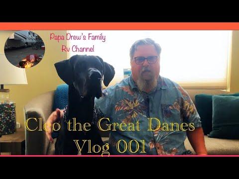 great-dane-vlog