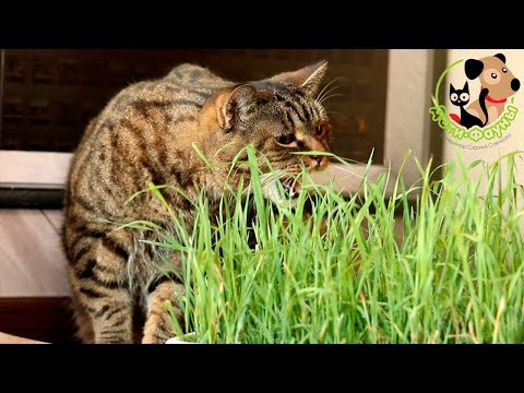 Вопрос: Стоит ли разрешать коту есть насекомых?