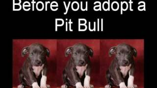 Interested In Pit Bull Adoption?