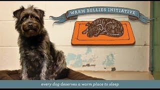 P.l.a.y. Warm Bellies Initiative - Dog Crate Beds For Homeless Pets