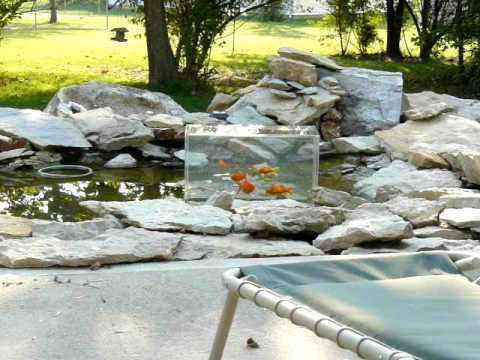 how to make a fish tank above pond