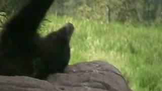 Bear Country USA,SD