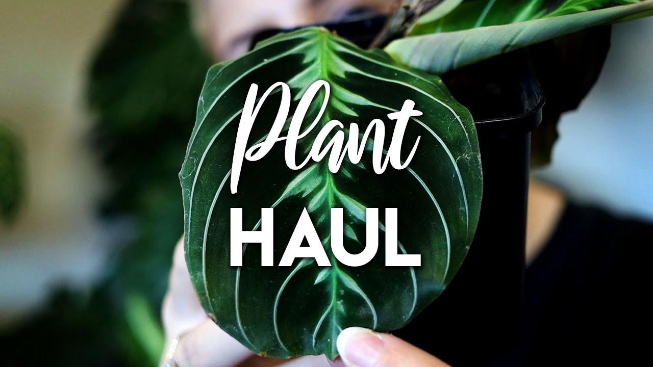 Plant Haul & Leaf Flex!
