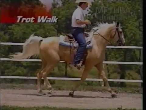 Gaits of the Missouri Fox Trotting Horse
