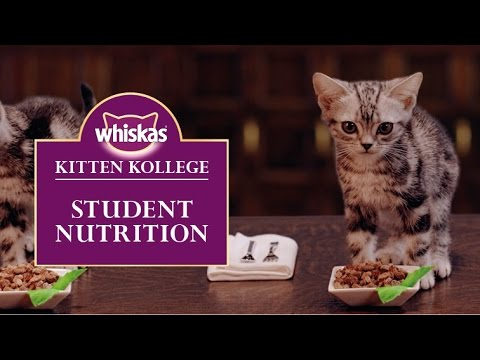 Ep.6 A Student Kittens Diet and Nutrition : Kitten Kollege