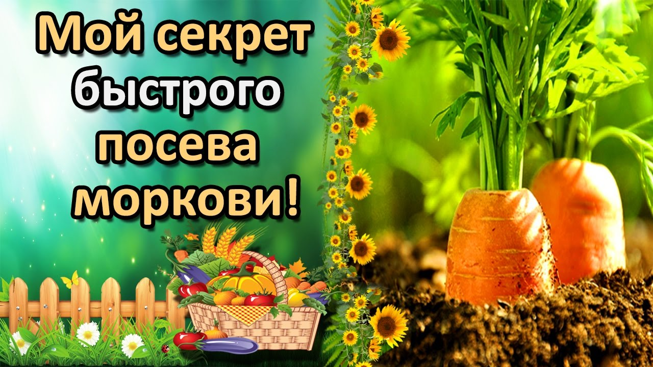 удобный способ посева <b>моркови</b>, который вы не знали!