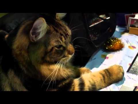 Portland Cat Show 2016 by William Edmonds