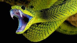 ТОП самых безжалостных убийц человека из мира животных [Удивительный мир#57]