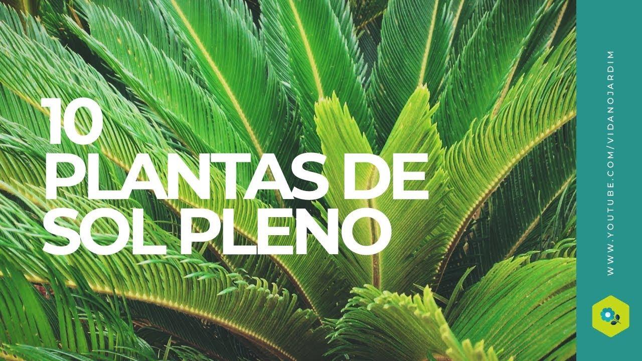 10 Plantas De Sol Pleno