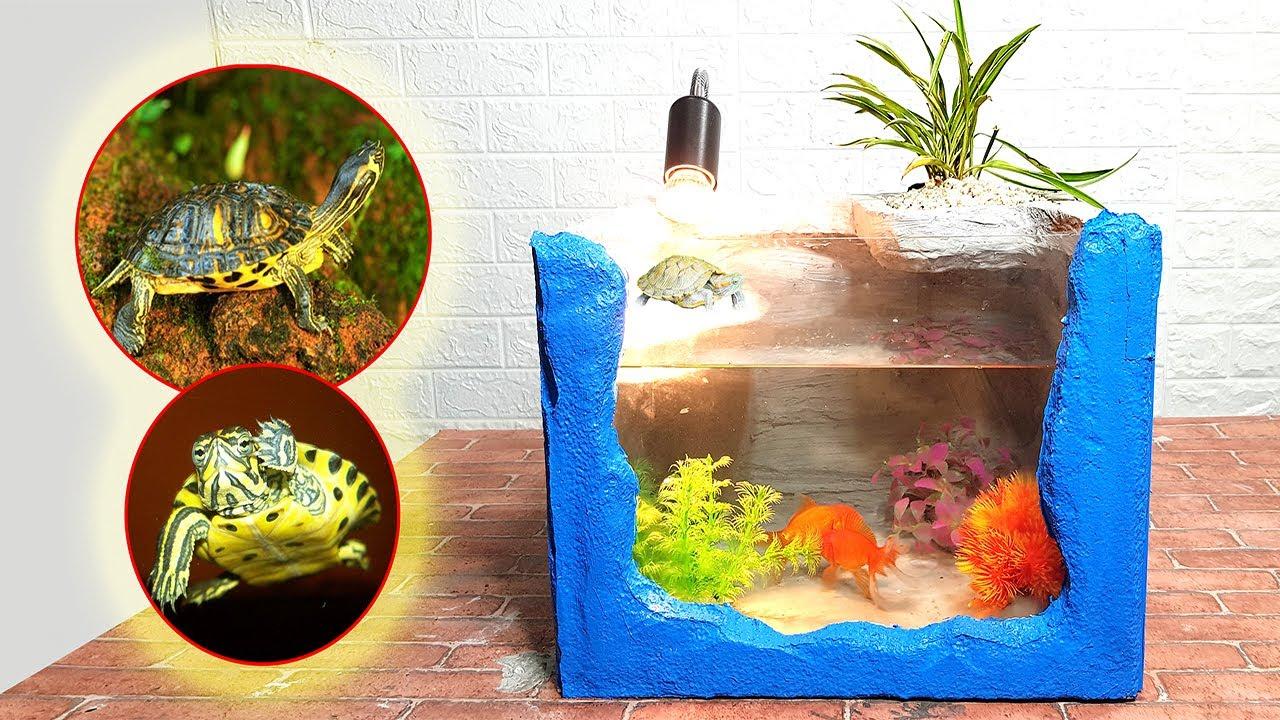 Làm bể cá mini cho cá vàng và rùa con | Make mini aquarium for goldfish and baby turtles