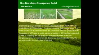 System of Rice Intensification course.wmv