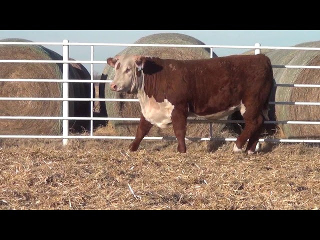 Express Ranches Lot 228