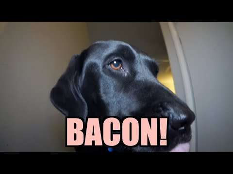 Talking Kitty Cat 27 – BACON!